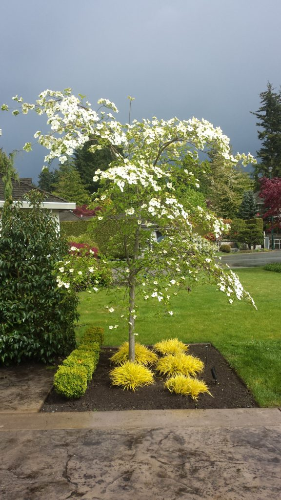 Gardeners For Hire, South Surrey and White Rock, BC gardening